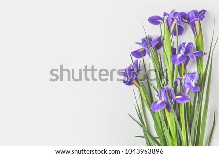 beautiful iris flowers with green leaves on grey  #1043963896
