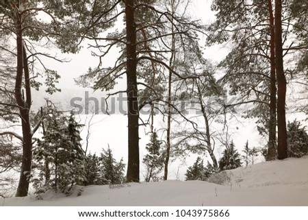 Belarus, Grodno, Molochnoe Lake. Winter pine forest by the lake #1043975866