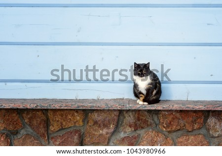 A photograph of a multi-colored cat that sits on a wooden surface against a wall of blue horizontal wooden boards. A pet resting in good weather. Background