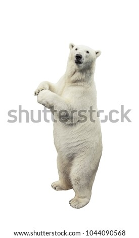 Standing polar bear. Isolated over white background Royalty-Free Stock Photo #1044090568