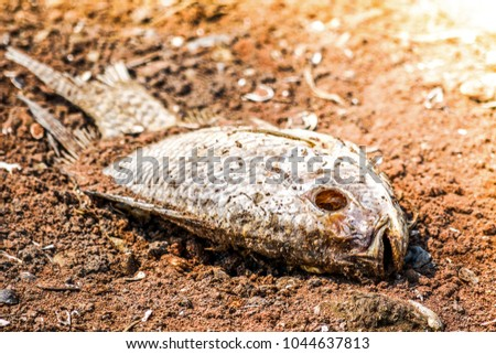 Dried fish laying on arid soil #1044637813