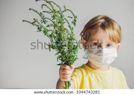 The boy is allergic to ragweed. In a medical mask, he holds a ragweed bush in his hands. Allergy to ambrosia concept. #1044743281