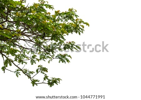 Green leaves isolated on white background #1044771991