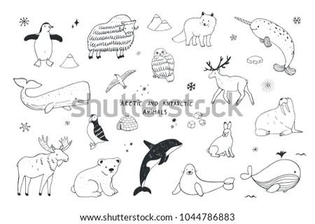 Arctic and antarctic polar doodle cartoon animals illustrations hand drawn set