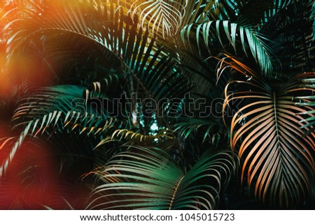 Deep dark green palm leaves pattern with bright orange sun flare effect. Creative layout, toned, horizontal
