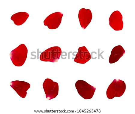 Vector set of floral-themed. Rose petals are red. #1045263478