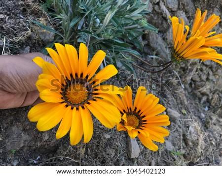 Best yellow flower #1045402123
