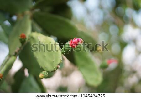 Pink Cactus Flower #1045424725