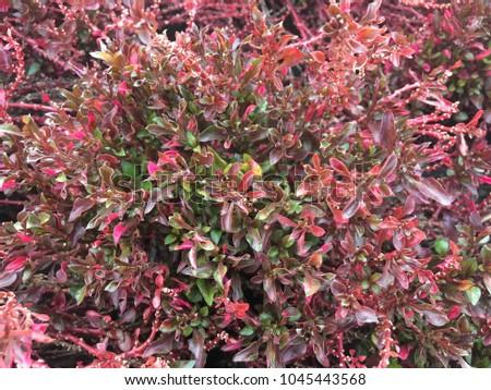 Beautiful flora in the garden #1045443568