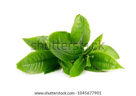 Green tea leaf isolated on white background #1045677901
