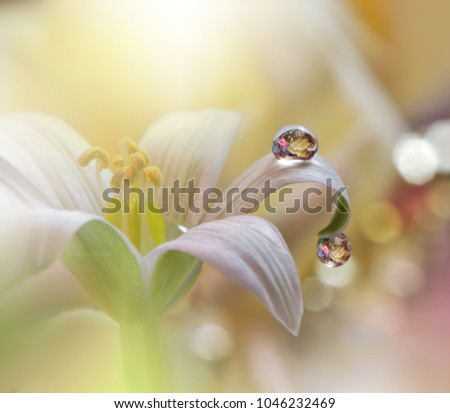 Gentle romantic artistic image. Soft pastel background blur .Reflection of the flower in the dew drop.Shallow depth of field.Modern art.Close up.Floral fantasy design.