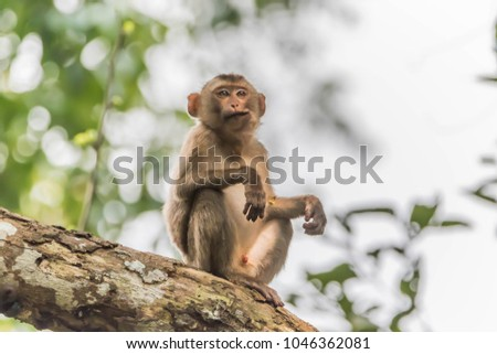Monkey or ape is the common name of the chordate phylum. Floor mammal Rated apes (Primates) manner similar to humans. Royalty-Free Stock Photo #1046362081