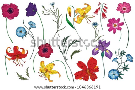 Wildflowers and herbs set. Colorful vector illustration. Floral elements.