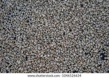 Unroasted coffe bean #1046526634