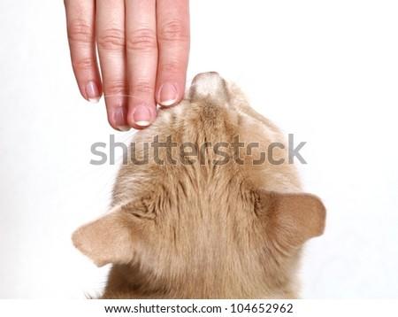 Girl stroking a ginger cat #104652962