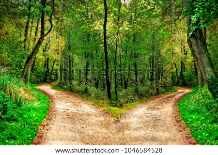 A forest path divides in two different directions Royalty-Free Stock Photo #1046584528