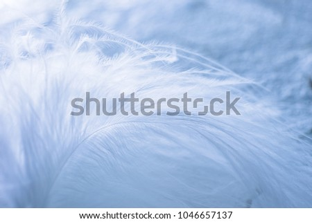 White on White. The Swan feather on grunge wall. #1046657137