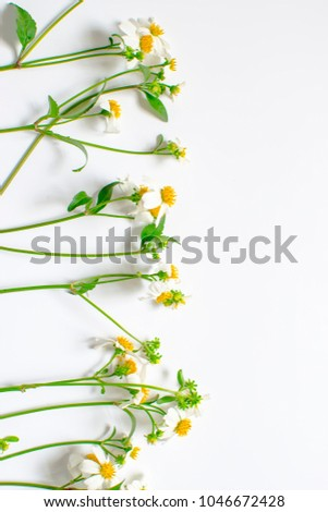 Wildflowers decoration isolated on white background #1046672428