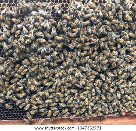The nesting of bees in the nest #1047332971