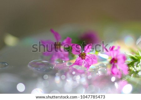 pink flower among water drop #1047785473