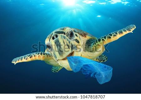 Plastic pollution problem - Sea Turtle eating plastic bag polluting ocean #1047818707