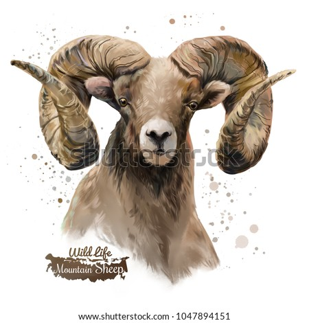 Mountain sheep. Watercolor painting
