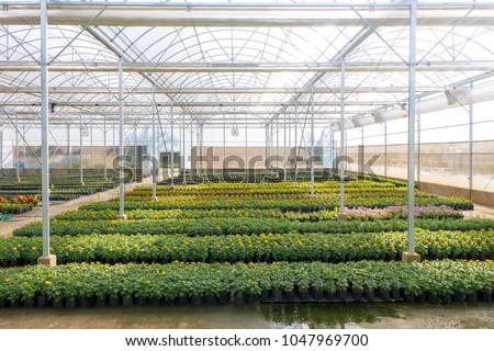 Blurred  flowers cultivation in a green house. Production flowers. Plants crop in greenhouse. #1047969700