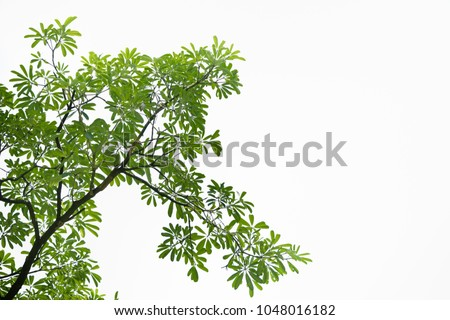 Closeup nature view of green leaf on blurred greenery background in garden with copy space using as background natural green plants landscape, ecology, fresh wallpaper concept. #1048016182