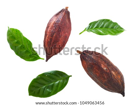 Cocoa pods with Cocoa leaf on a white background #1049063456
