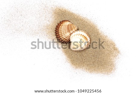 Sea shells in sand pile isolated on white background, top view #1049225456