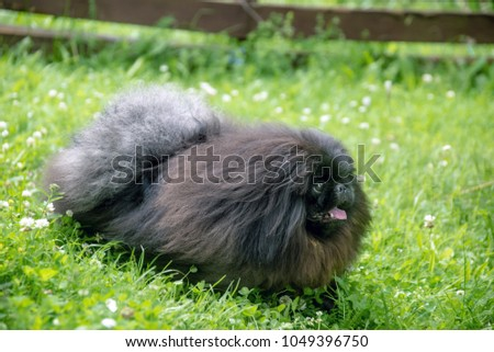 cute black puppy funny dog outdoors #1049396750