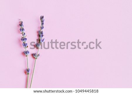 violet lavender flowers arranged on bright purple background. Top view, flat lay. Minimal naturopathy concept. Copy space, april love, natural lavanda handmade, homeopathy essential skincare healing. #1049445818