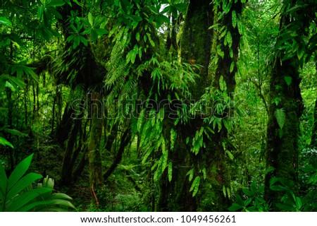 Asian tropical rainforest #1049456261