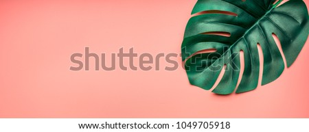 tropical monstera leaf on a pink summer background, banner, space for text, flat lay