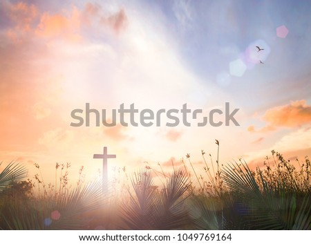 Religious concept: Silhouette cross with palm leaves over meadow autumn sunset background
