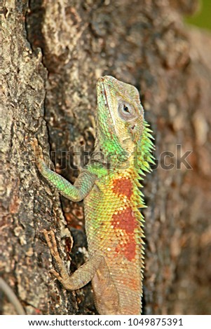 The lizard on the tree #1049875391