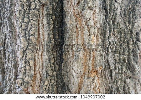 Wood texture background. trunk detail texture background. Bark tree texture wallpaper. Abstract background. postcard. Gnarl tree. #1049907002