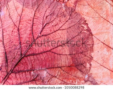 Texture image Beautiful of red dry leaf for background. Leaves dry, visible to the leaf structure or Anatomy of leaf.