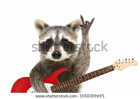 Portrait of a funny raccoon with electric guitar, showing a rock gesture, isolated on white background #1050309695