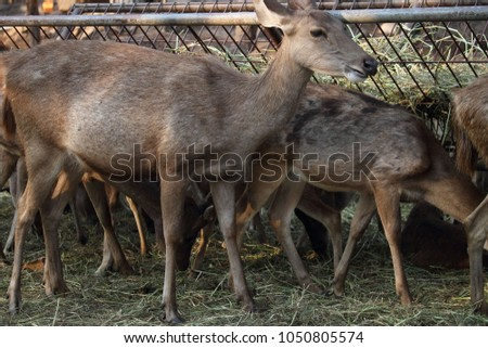 The close up face of Deer, are the ruminant mammals forming the family Cervidae. #1050805574