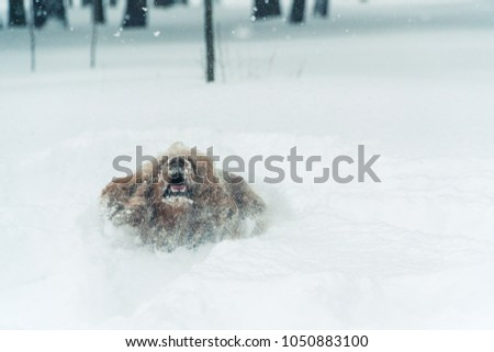 Winter. The dog is all in the snow #1050883100