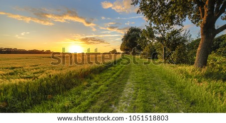 Wheat field along old oak track at sunset on Dutch countryside Royalty-Free Stock Photo #1051518803
