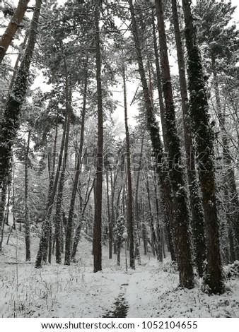 Snow wonderland in park #1052104655