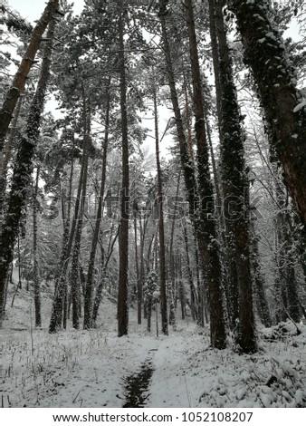Snow wonderland in park #1052108207
