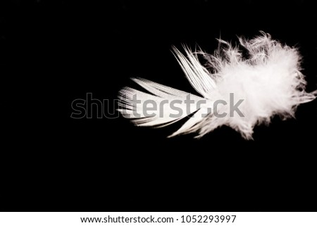 Shallow Depth of Field Macro Photo of a single white feather on a black background