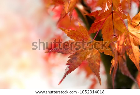 Close up of maple leaves in the forest with selective focus effect #1052314016