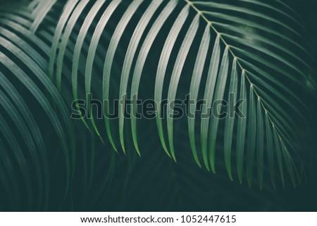 Palm leaf background. #1052447615