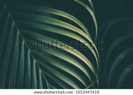 Palm leaf background. #1052447618