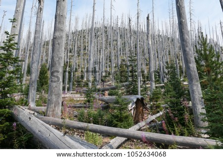 Hiking at PCT trail #1052634068