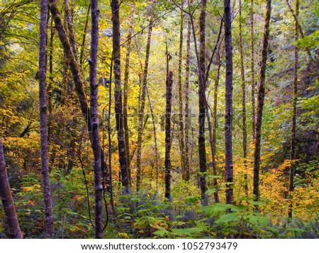 Dense mossy green forests #1052793479